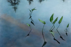 """Pickerel Weed<br />Watercolor & pastel on paper, 20X26"""""""